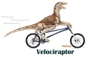 Velociraptor on a bicycle