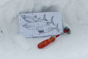 Plan for snow sharks