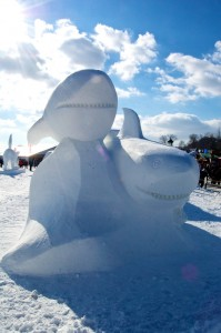 Sharks hiding in snow